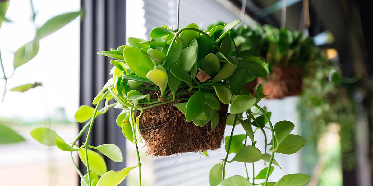 Cuidado de las plantas de interior florer a reviens - Cuidado de plantas de interior ...